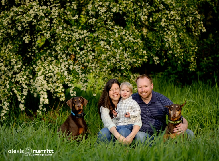 Mom, Dad, Toddler and two dogs | Seattle Family Photographer