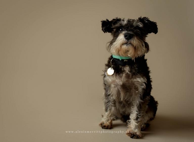 Studio portraits dog | Bothell family photographer