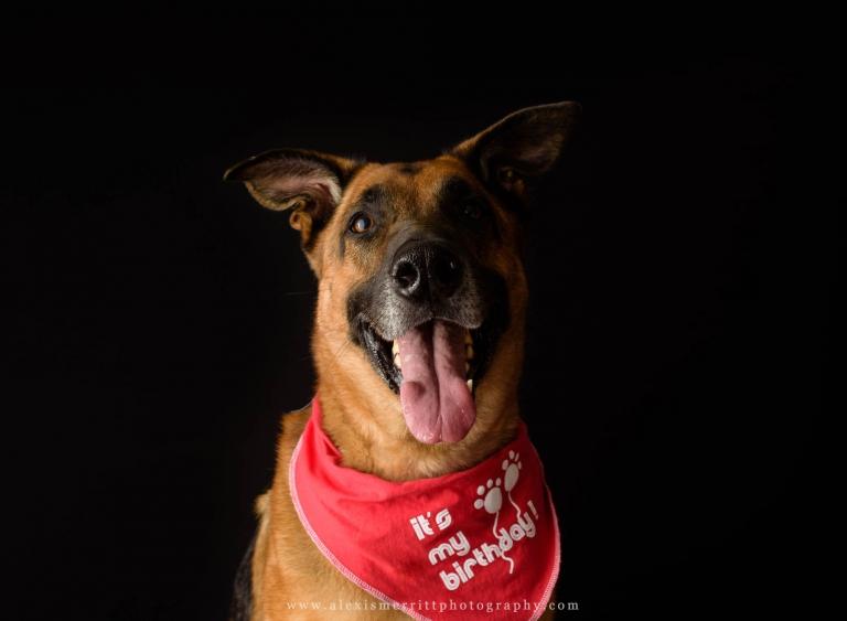 Dog on his birthday   Seattle Studio Photographer